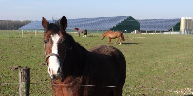 400 kWp Stall